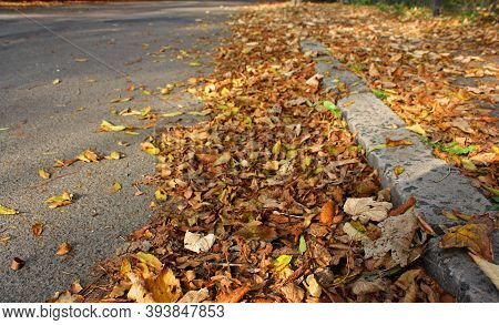 Grey Urban Asphalt Road And Dry Autumnal Fallen Leaves On The Sidelines. October Time. Sun Glare.