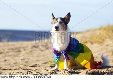 Cute Funny Dog With Colorful Rainbow Gay Lgbt Flag. Pride Holiday Concept. Outdoor Lifestyle. Copy S
