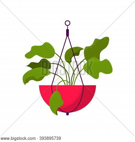 Beautiful Potted Home Hanging Flower. Vector Illustration Isolated On White Background. Trendy House