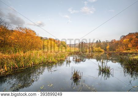 Idyllic Lake Scenery In The Fall With Trees And Rushes In Golden Autumn Colors