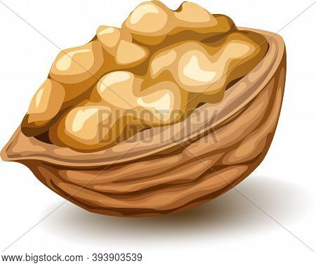 Walnut In The Nutshell. Vector Realistic Illustration Isolated