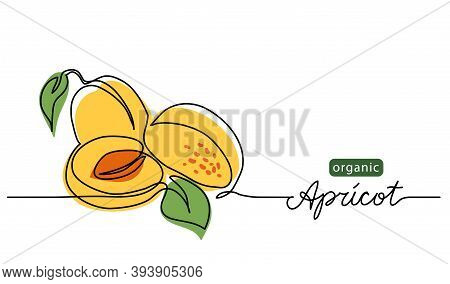 Apricot Vector Illustration. One Line Drawing Art Illustration With Lettering Organic Apricot.