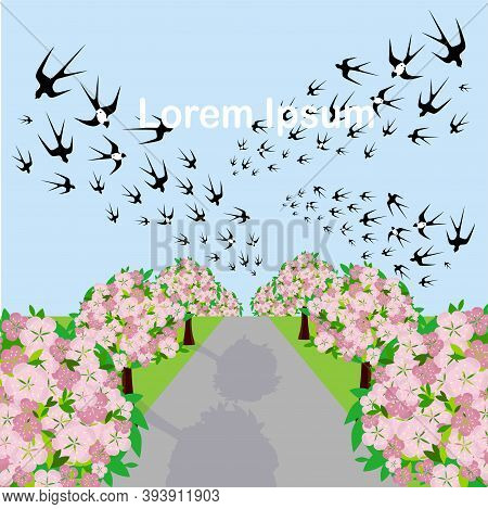 Sakura Blooming Tree Near Road Landscape Blue Sky Swallow Lorem Ipsum Flat Design Art Design Stock V