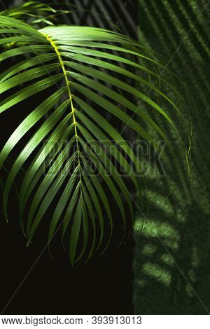 Sunlight And Shadow On Surface Of Green Palm Leaf Is Growing In Home Gardening Area