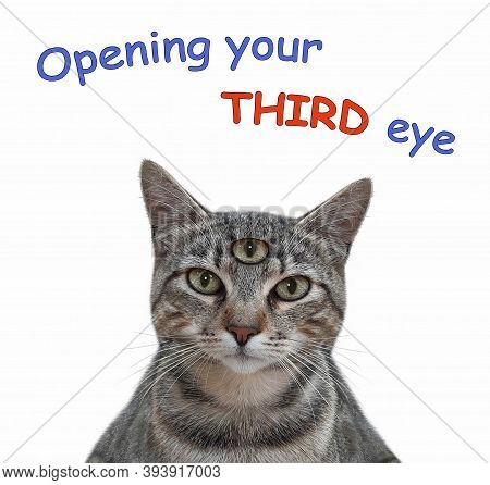 A Gray Cat Has Got Third Eye. Open Your Third Eye. White Background. Isolated.