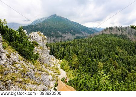 Coniferous Forest With Mountain Pine And Spruces On Rocky Gesia Szyja Mount In Tatra Mountains, With