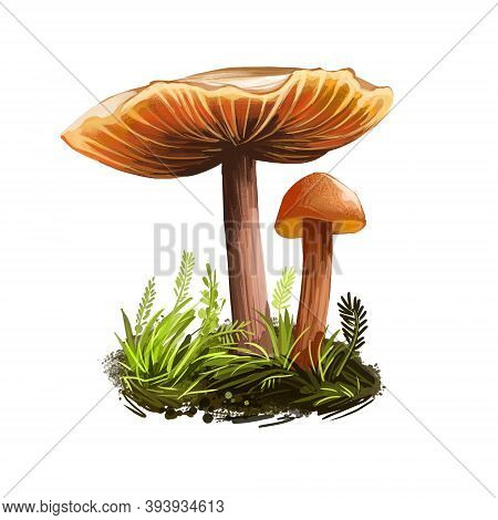 Laccaria Laccata Deceiver, Waxy Laccaria, White-spored Species Of Small Edible Mushroom. Digital Art