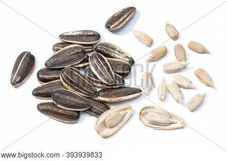 Sunflower Seeds Isolated On White Background. Helianthus Seed