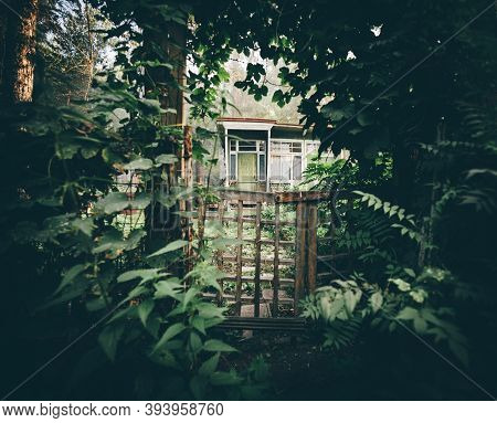 A Dark Mysterious Wooden Gate Overgrown With Ivy And Other Greenery Of The Entrance To A Desolate Su