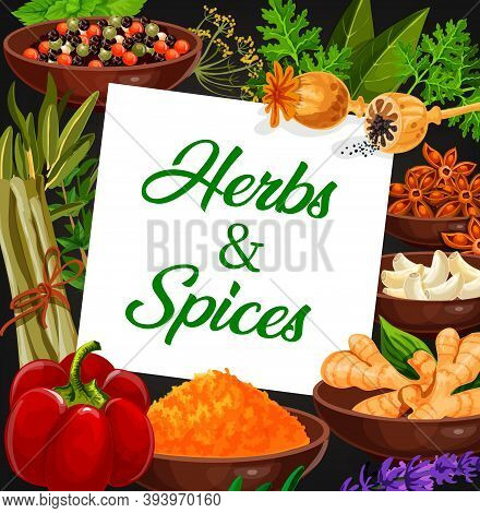 Herbs And Market Vector Banner. Opium Poppy, Peppercorn And Dill, Coriander Or Parsley, Bay Leaf And