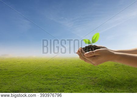 Hands Holding A Tree Against A Blue Sky On Nature Field Grass. Forest Conservation And Eco Concept.