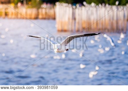 The White Seagulls Spread Its Wings Over The Turquoise Sea Surface, With A Wooden Pillar Set In The