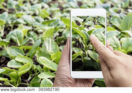 Smart Farming Agribusiness And Technology. Farmer Hand Using Smart Phone Scanning Track Application