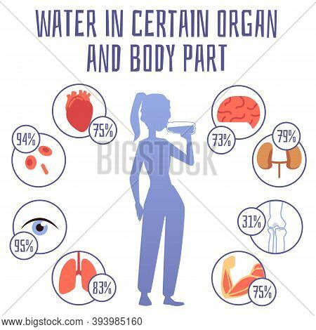 Water In Certain Organ And Body Part Infographic Banner Flat Vector Illustration.