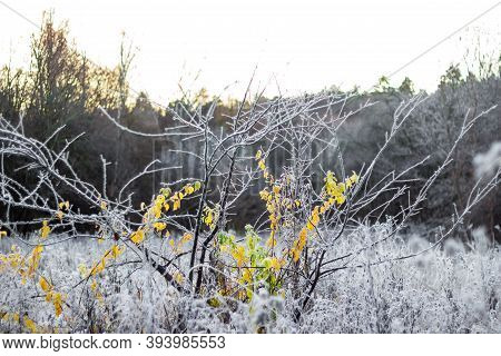 Plants In A Field Covered With White Frost On A Cold Morning. Beautiful Frosty Background Of Frosty