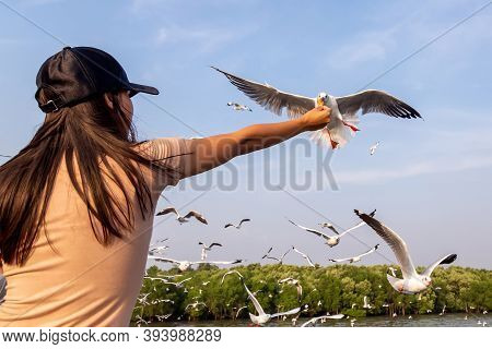 Asian Women Are Feeding The Seagulls At Bang Pu Resort, Thailand. Seagulls Migrate To Eat Pork From