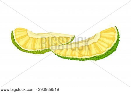 Pieces Of Ripe Jackfruit With Green Pimpled Shell And Fibrous Core Vector Illustration