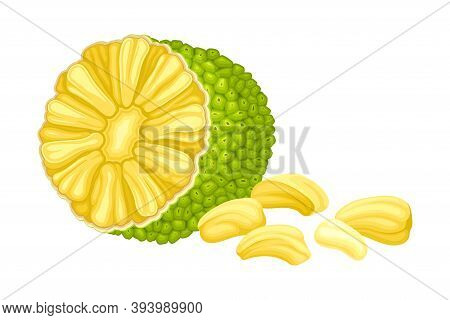 Ripe Jackfruit With Green Pimpled Shell And Fibrous Core Vector Illustration