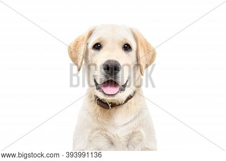 Portrait Of A Cute Labrador Puppy, Looking At Camera, Isolated On White Background