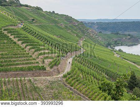 Hiking Path Trhough Wineyard German Region Moselle River Winningen