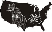 Cougar and U.S. outline map. Black and white vector illustration. Puma concolor. poster