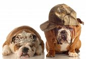 english bulldog couple - one wearing princess tiara the other wearing ballcap poster