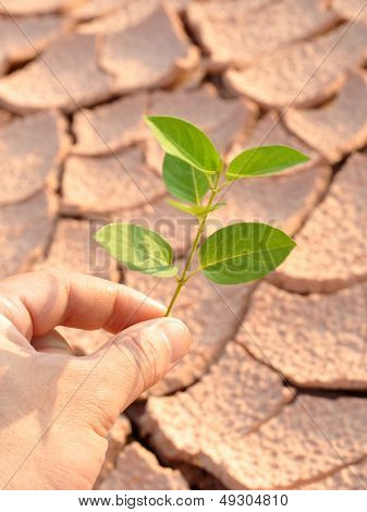 Dry land green leaves