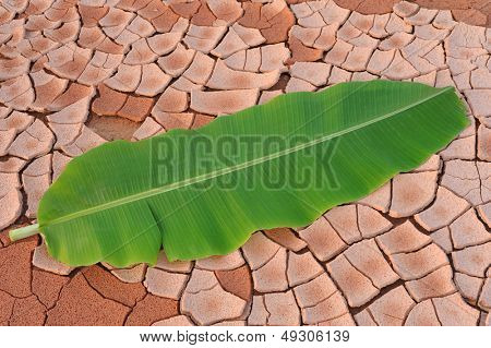 Arid lands of Banana Leaf poster