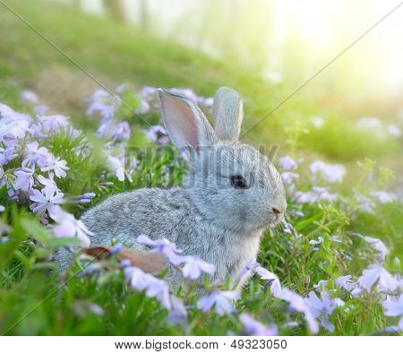 Cute Rabbit in the Garden with Flowers
