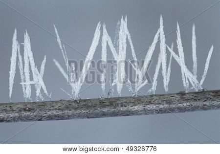Ice needles on twig close-up