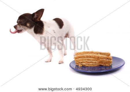 chihuahua and cake on the white background poster