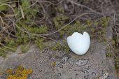 broken egg shell on a rock poster