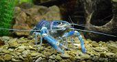 Aquarium marine blue animal cancer ocean bright poster