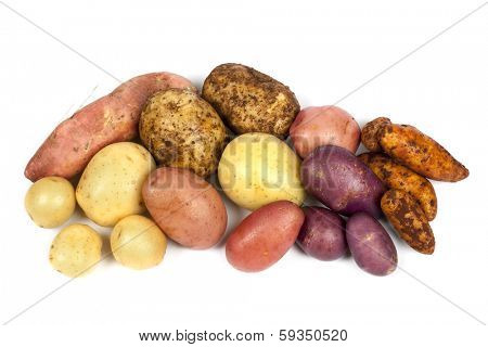 Different varieties of potatoes, isolated on white background.