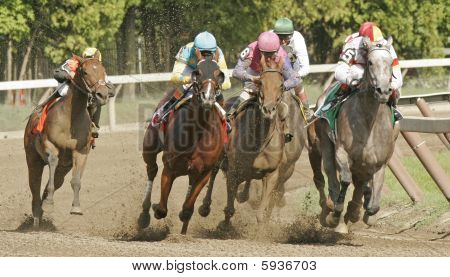 Field of Racing Horses
