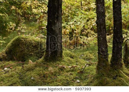 Juneau Alaska rainforest