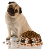 pug sitting beside a full bowl of dog food poster