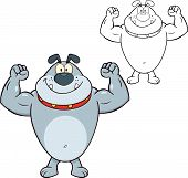 Smiling Gray Bulldog Cartoon Character Showing Muscle Arms  Illustration Isolated on white poster