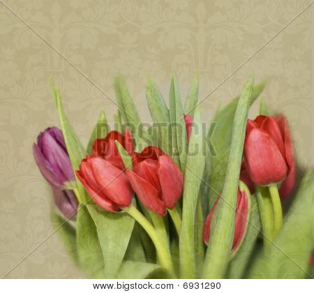Photo Illustration of Spring Tulips on Damask Background