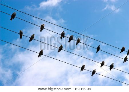 Birds lined up on a telephone lines against blue sky poster