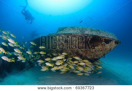 School Of Fish Around A Small Shipwreck
