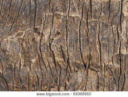 Coconut Skin Texture