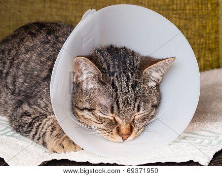 Sleeping Cat With An Elizabethan Collar