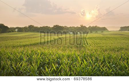 Midwestern Cornfield Below Setting Sun