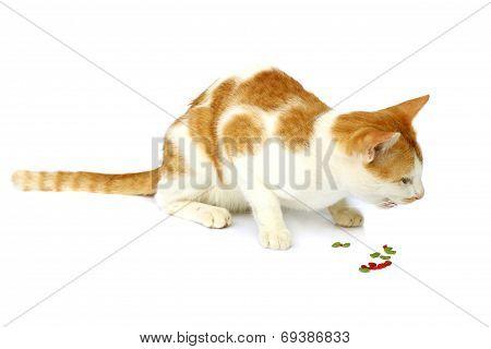 Image Of Cat Eating Cat Food