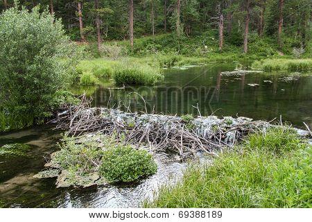 Beaver Dam