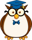 Wise Owl Teacher Cartoon Character With Glasses And Graduate Cap  Illustration Isolated on white poster