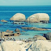 Beautiful view of the beach of Atlantic Ocean (South Africa) with african penguins, square image, instagram effect poster