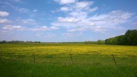 Golden Rural Louisiana
