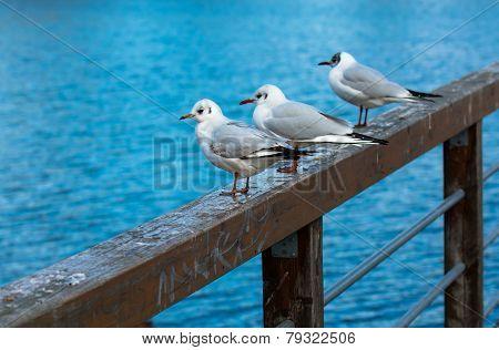 Relaxing Seagulls On Banister
